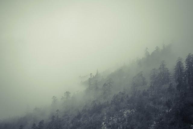 Joel Ye fog forest